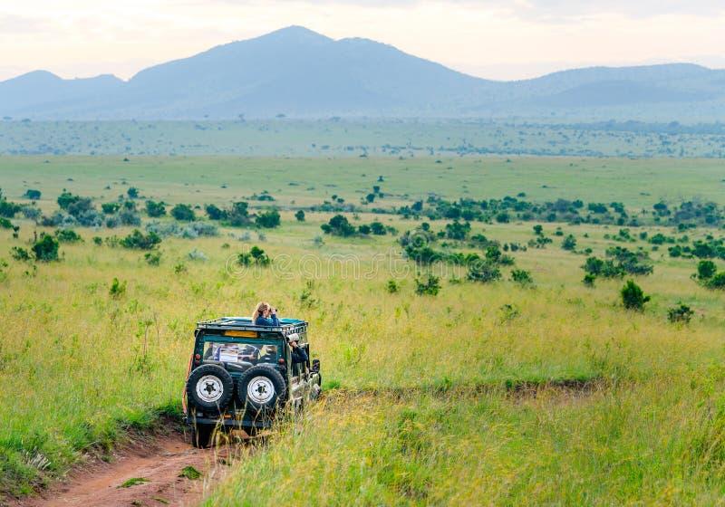 非洲驾驶在马塞人玛拉和塞伦盖蒂国家公园的徒步旅行队吉普 免版税库存照片