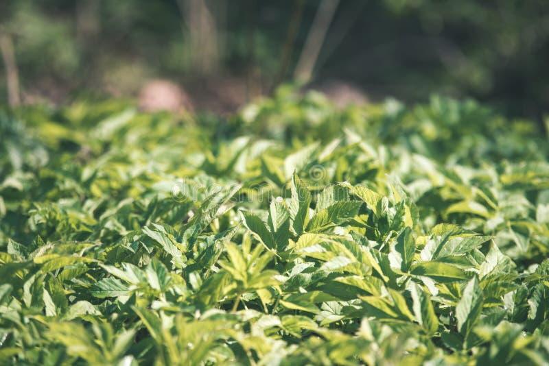非特性森林叶子床细节-葡萄酒减速火箭的神色 库存图片