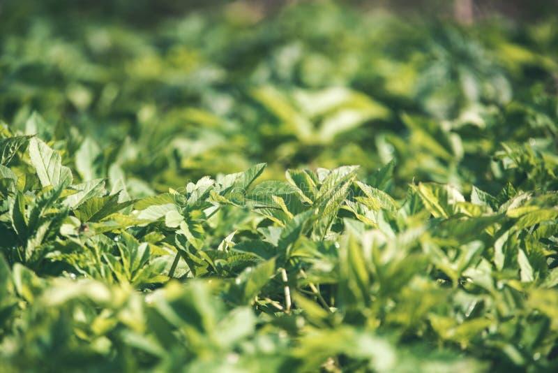 非特性森林叶子床细节-葡萄酒减速火箭的神色 免版税图库摄影