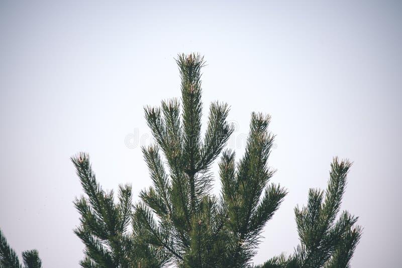 非特性森林叶子床细节-葡萄酒减速火箭的神色 免版税库存图片