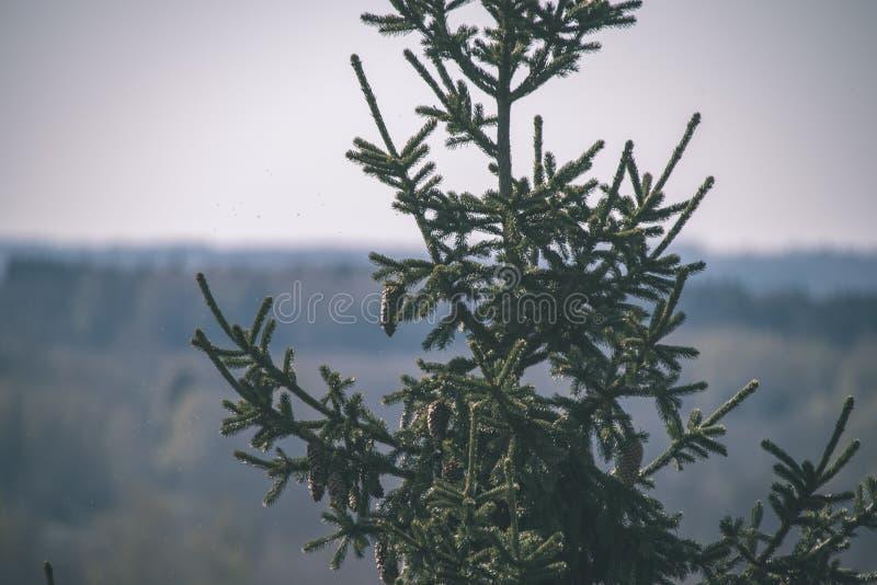 非特性森林叶子床细节-葡萄酒减速火箭的神色 库存照片