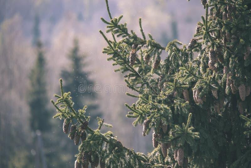 非特性森林叶子床细节-葡萄酒减速火箭的神色 图库摄影
