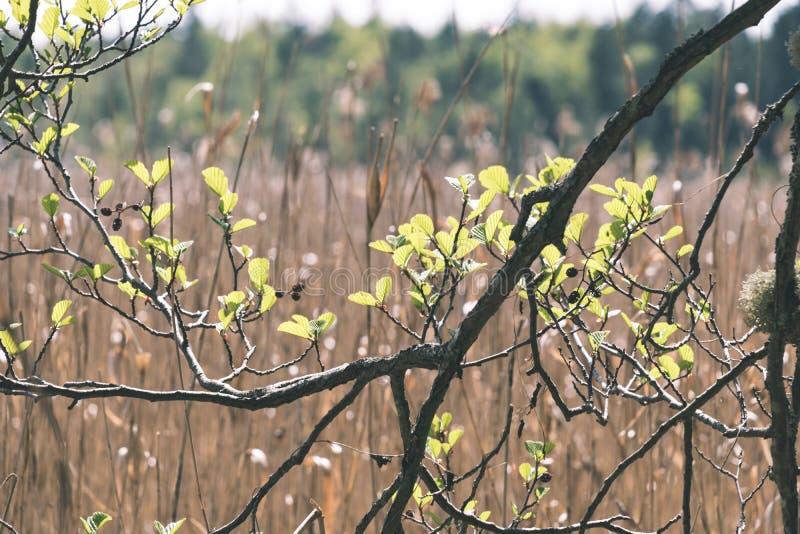 非特性森林叶子床细节-葡萄酒减速火箭的神色 免版税库存照片