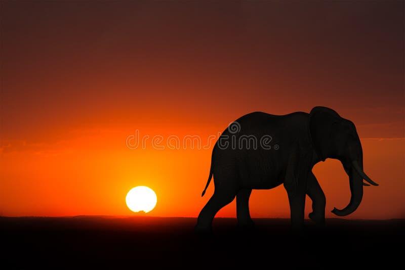 非洲大象日出日落野生生物 免版税库存照片