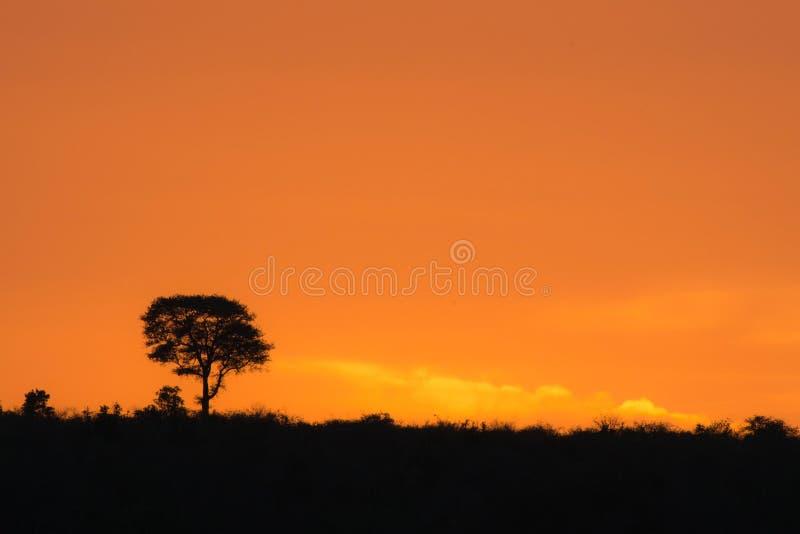 非洲日出 免版税库存照片