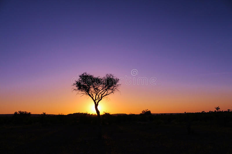 非洲日出 库存图片