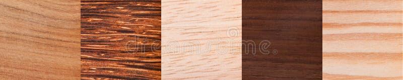 非洲木纹理 库存图片
