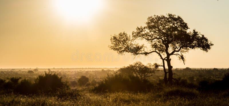 非洲背景 免版税库存图片