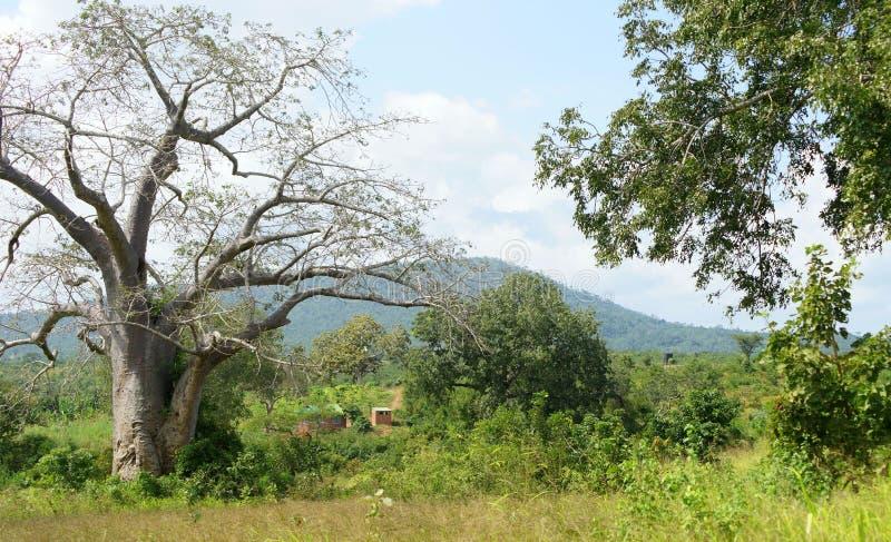 5 2009年非洲舞蹈东部maasai行军执行的坦桑尼亚村庄战士 免版税库存照片