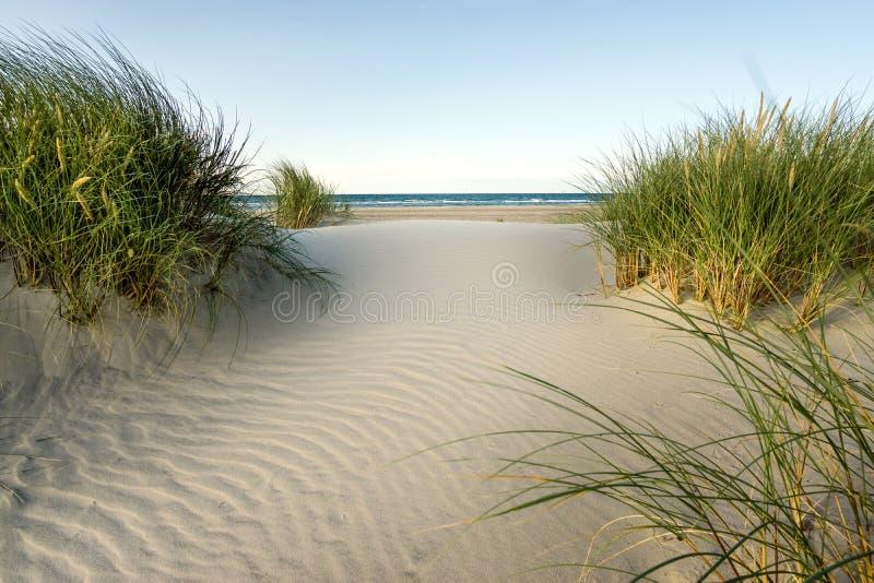 靠岸与沙丘和滨草草在软的晚上日落光 免版税库存照片