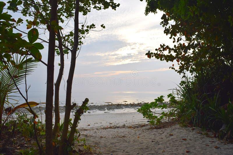 靠岸的桑迪遮荫道路通过沿海绿色植物- Kalapathar海滩, Havelock海岛,安达曼尼科巴,印度 免版税库存图片