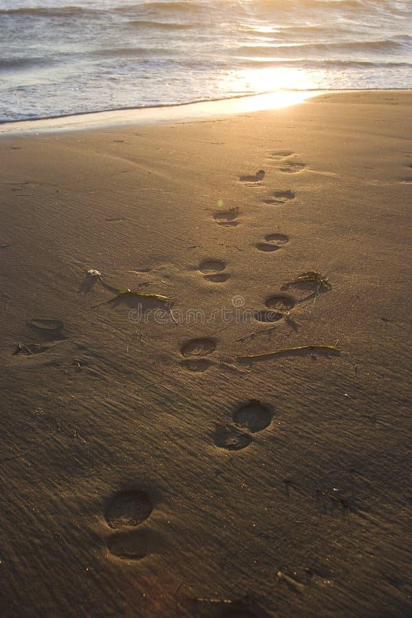 靠岸,波浪和脚步在日落时间 图库摄影