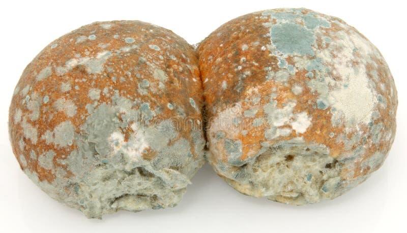 面包发霉的卷 免版税库存图片