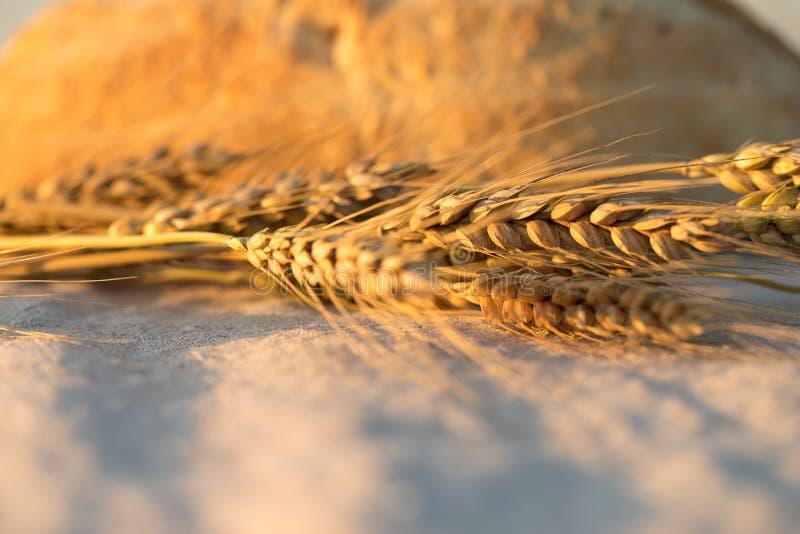 面包和麦子耳朵 面包和麦子在桌布 库存照片