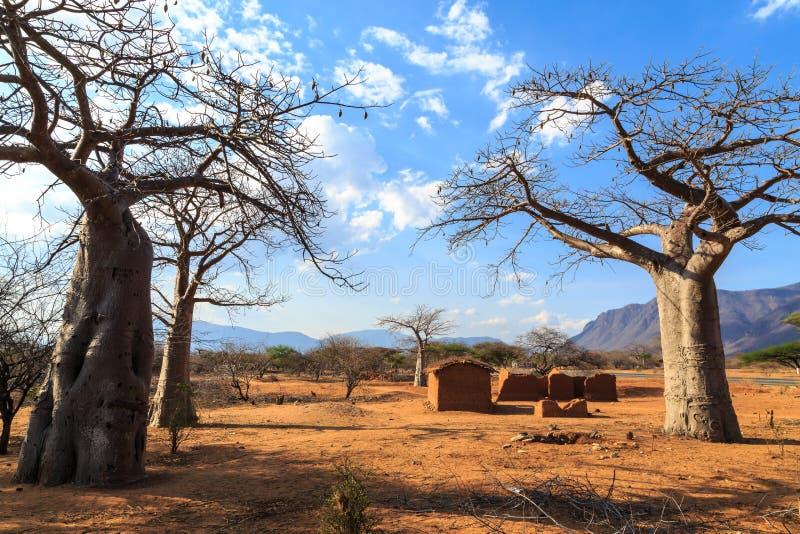猴面包树树包围的议院在非洲 免版税库存图片