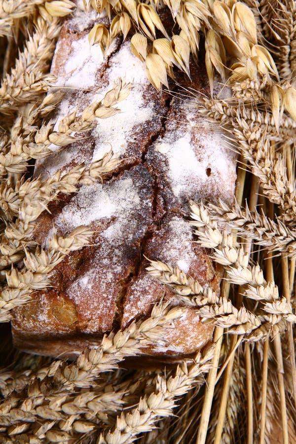 面包黑麦 库存照片