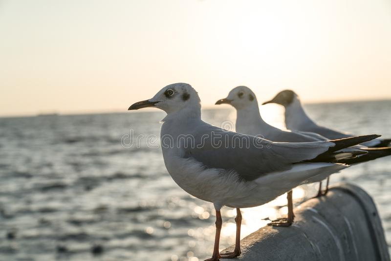 面对同一个方向的三只海鸥 免版税图库摄影