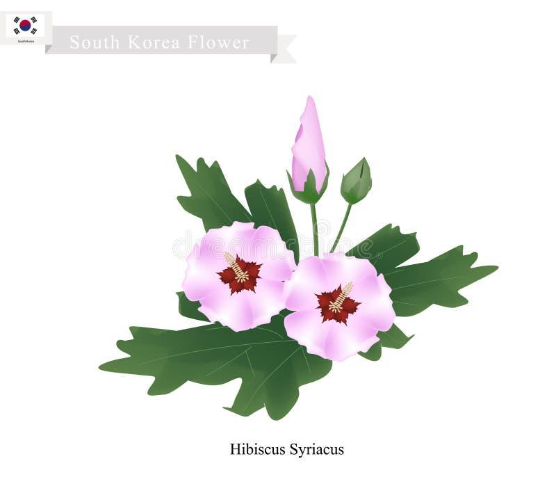 韩国的全国花,木槿Syriacus 库存例证