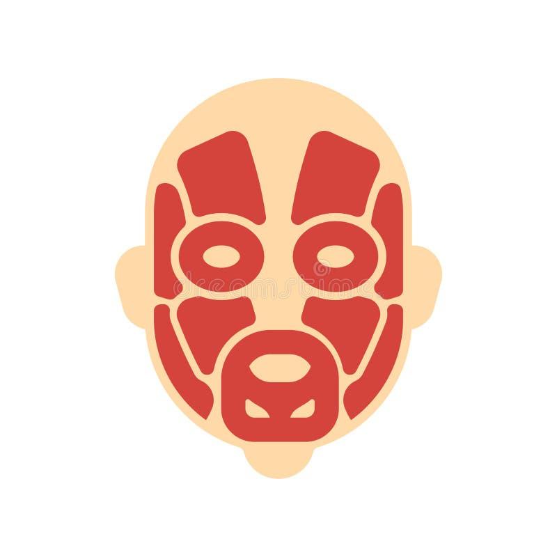 顶头肌肉系统人体系统 面孔肌肉解剖学 库存例证