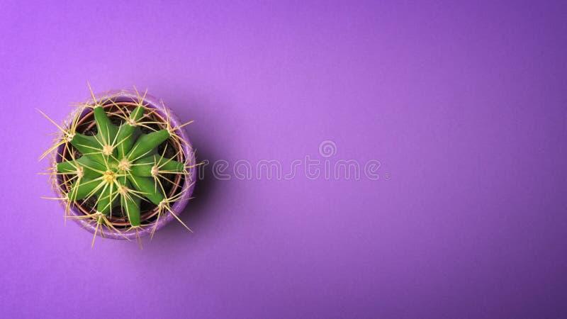 顶视图在陶瓷罐的绿色仙人掌有在淡色紫外背景的拷贝空间的 最小的概念 平的位置 免版税库存照片