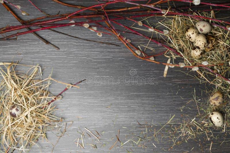 顶视图复活节背景 在木桌上的愉快的复活节鹌鹑蛋与美丽的杨柳 纹理土气木与装饰和 库存照片