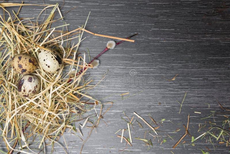 顶视图复活节背景 在木桌上的愉快的复活节鹌鹑蛋与美丽的杨柳 纹理土气木与装饰和 免版税库存照片