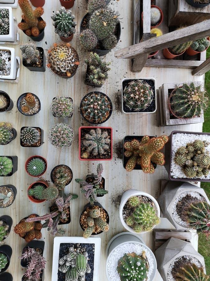 顶视图小绿色仙人掌和花植物 库存图片