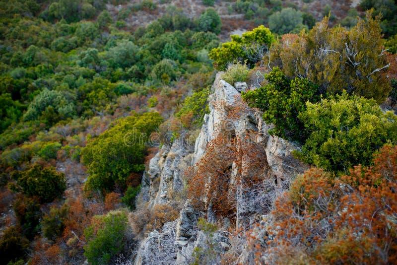 顶视图山岭地区和沿海科西嘉海岛,法国的伟大的峭壁 库存图片