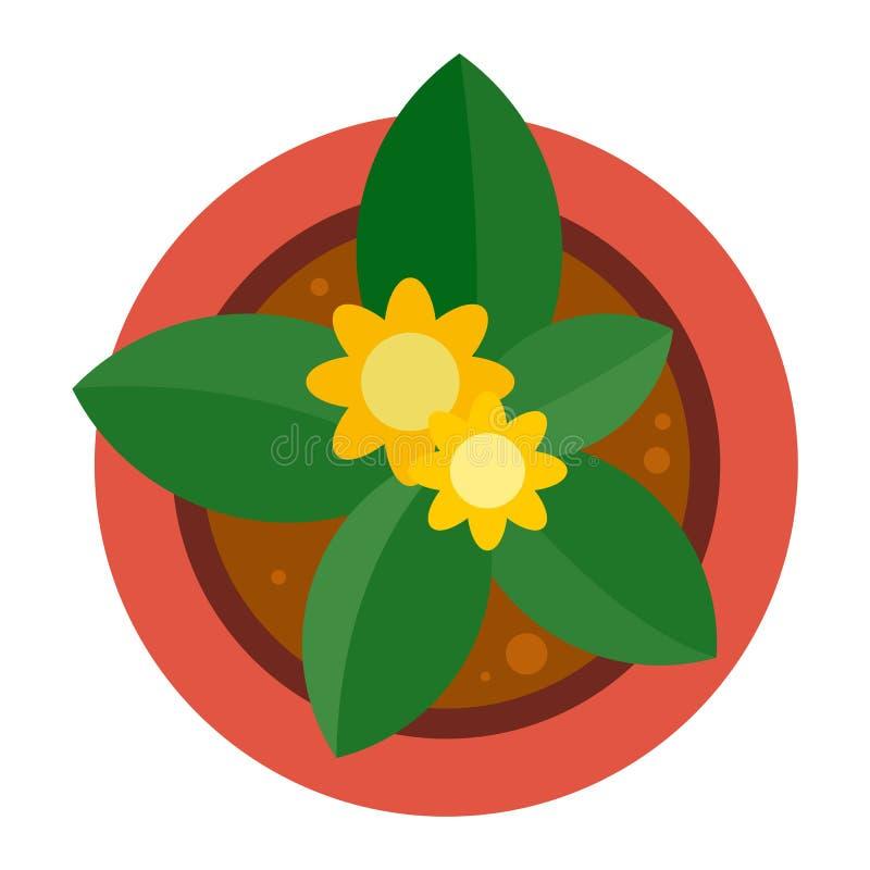 顶视图植物罐象,平的样式 皇族释放例证
