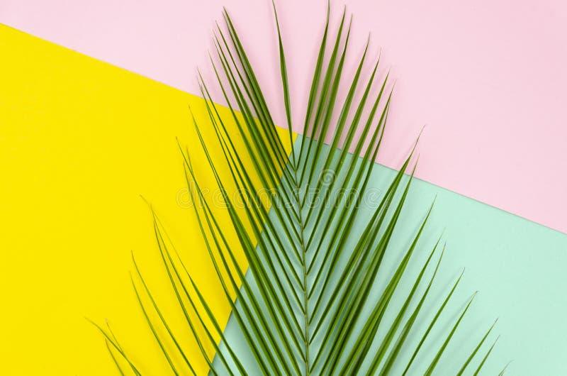 顶视图流行音乐布局在中部的由热带棕榈叶制成在五颜六色桃红色,薄荷和黄色多色 库存照片