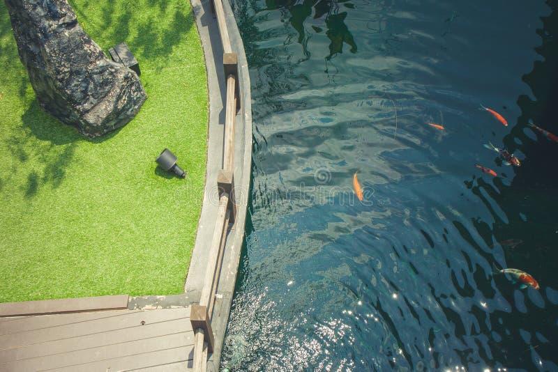 顶视图热带池塘和绿色草甸在室外庭院调遣 免版税图库摄影