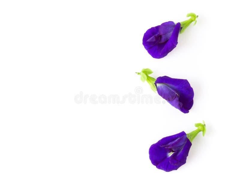 顶视图蝴蝶在白色背景、草本和medi的豌豆花 图库摄影