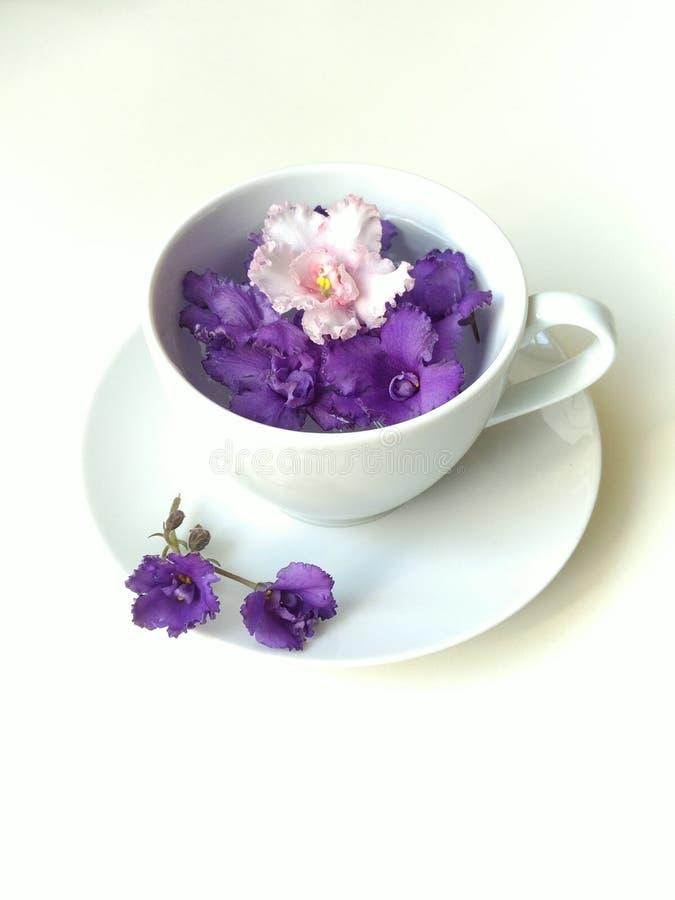 顶视图,平的布局,与干净的饮用水的雪白茶咖啡蒸汽,安置紫色非洲堇的芽 ?? 库存图片