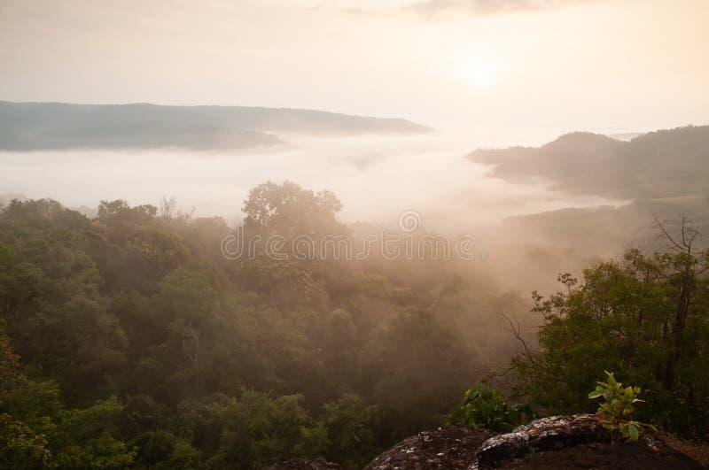 顶视图,金黄日出在薄雾和常青森林泰国老挝边界附近发光下来 Na Haeo,Loei,泰国 冬天 图库摄影