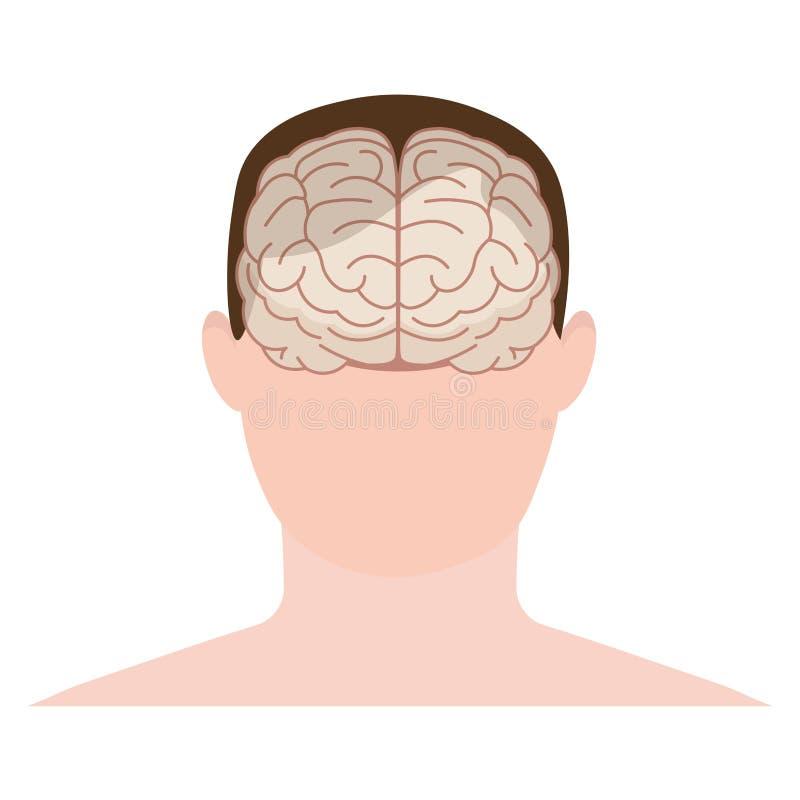 顶头人、面孔和脑子在平的样式 也corel凹道例证向量 f 皇族释放例证