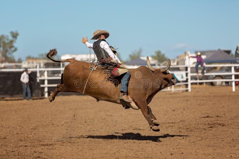顽抗公牛的牛仔骑马在国家圈地 免版税库存照片