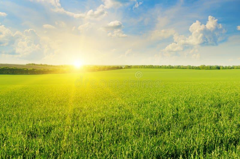 领域、日出和天空 免版税库存图片