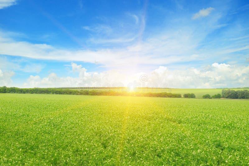 领域、日出和天空 免版税库存照片