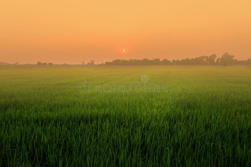 领域、日落和天空 免版税库存图片