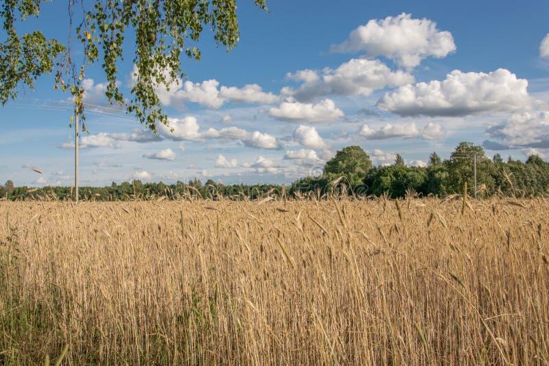 领域和天空与白色云彩 美丽如画的农村风景 免版税库存图片