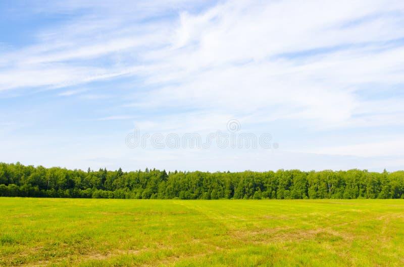领域和天空的森林 库存照片