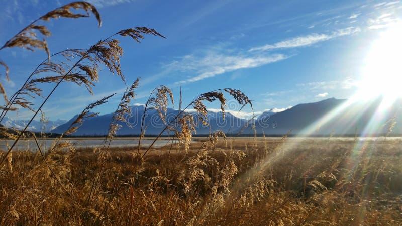 领域和山,阿拉斯加 免版税库存图片