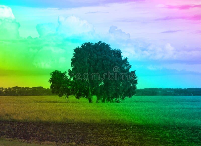 领域和美术的树丛彩虹颜色的 免版税库存图片