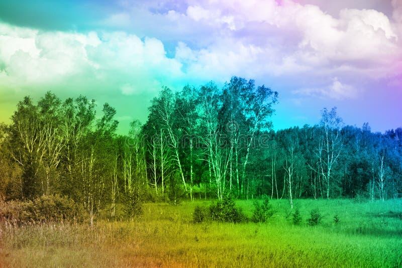 领域和美术的树丛彩虹颜色的 免版税图库摄影