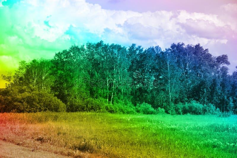 领域和美术的树丛彩虹颜色的 库存照片