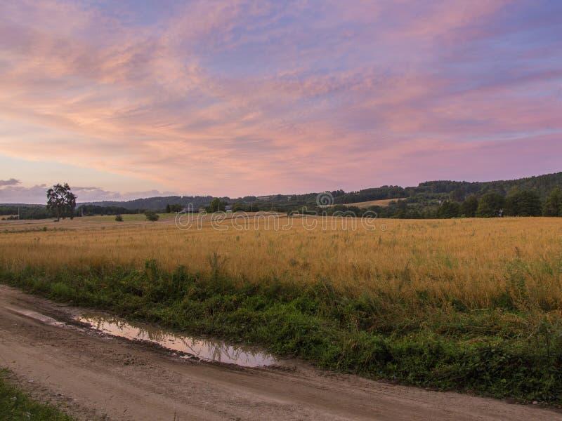 领域和草甸日落的 免版税库存图片