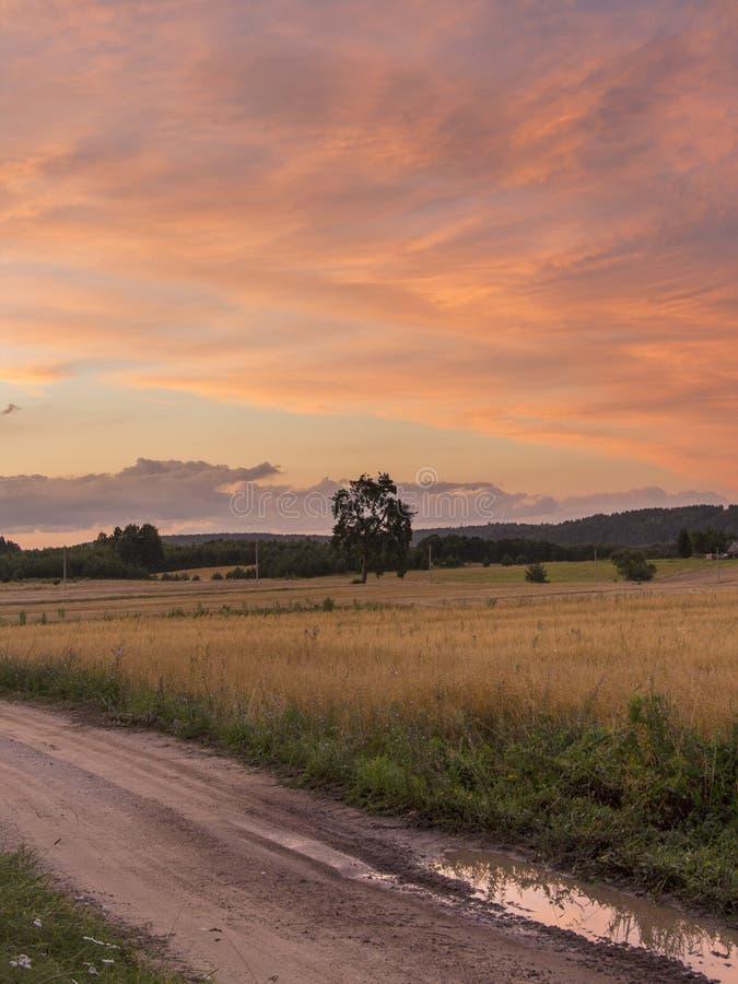 领域和草甸日落的 免版税库存照片
