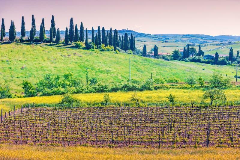 领域和葡萄园绵延山的在托斯卡纳,意大利 免版税库存照片