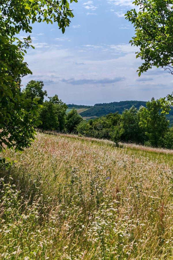 领域密集地种植与在树中丛林的泥床在小山的 库存图片