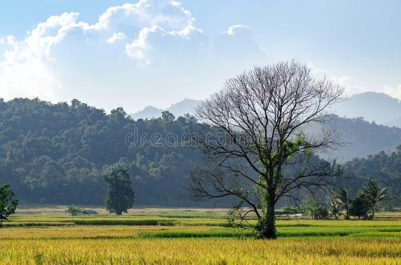 领域是干燥的与树在谷和美丽的sk 免版税库存图片